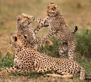 7-Day Southern Tanzania Safari in Ruaha, Mikumi & Selous
