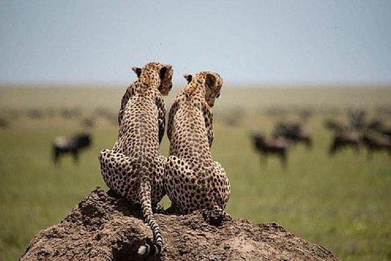 Serengeti Ngorongoro