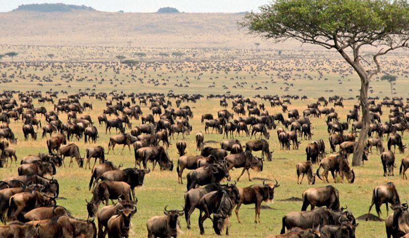 Southern Serengeti Ndutu