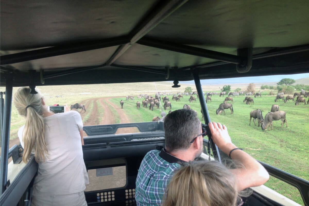 Wildebeest Spotted During Game Drive