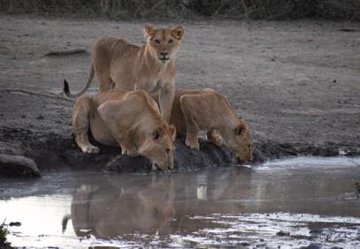 3-Day Safari Northern Tanzania National Parks