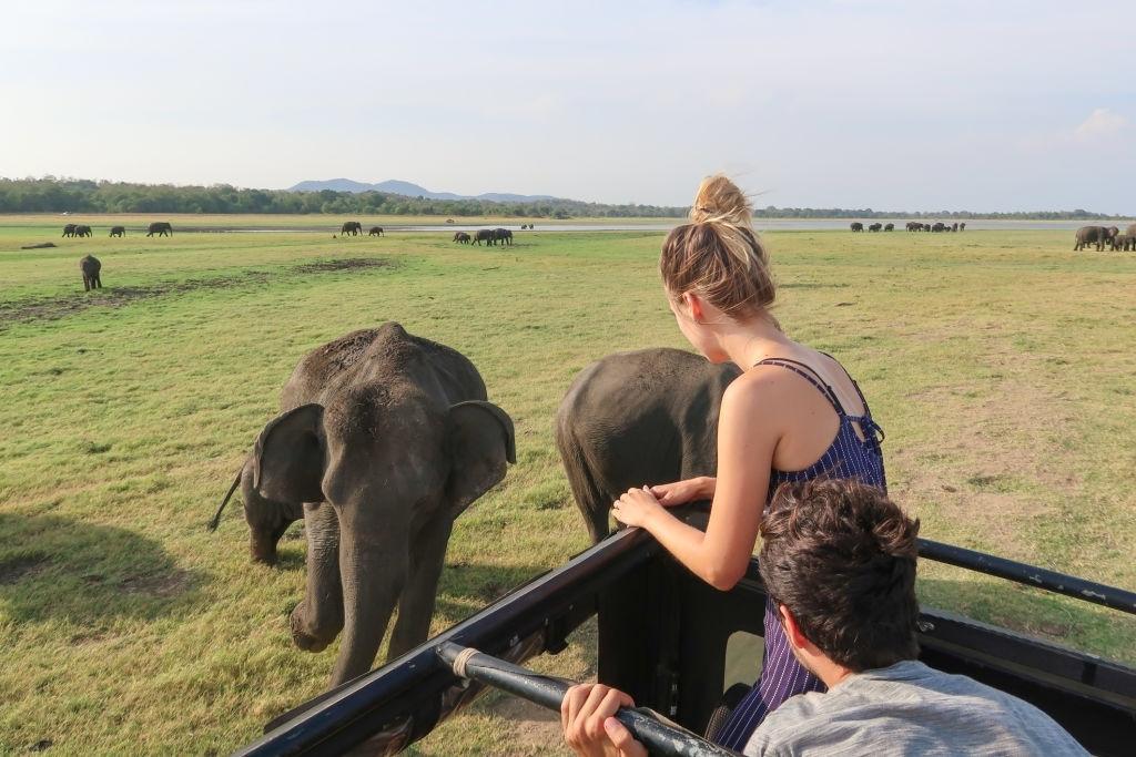 Safari At Minneriya National Park, Sri Lanka