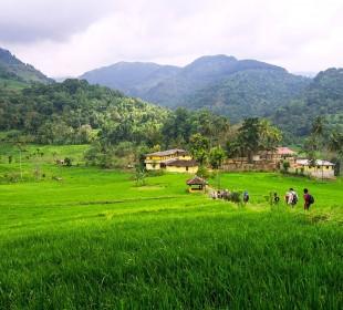 8-Day Sri Lanka Wildlife & Village Safari