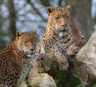 12-Day Wildlife & Campfires in Sri Lanka