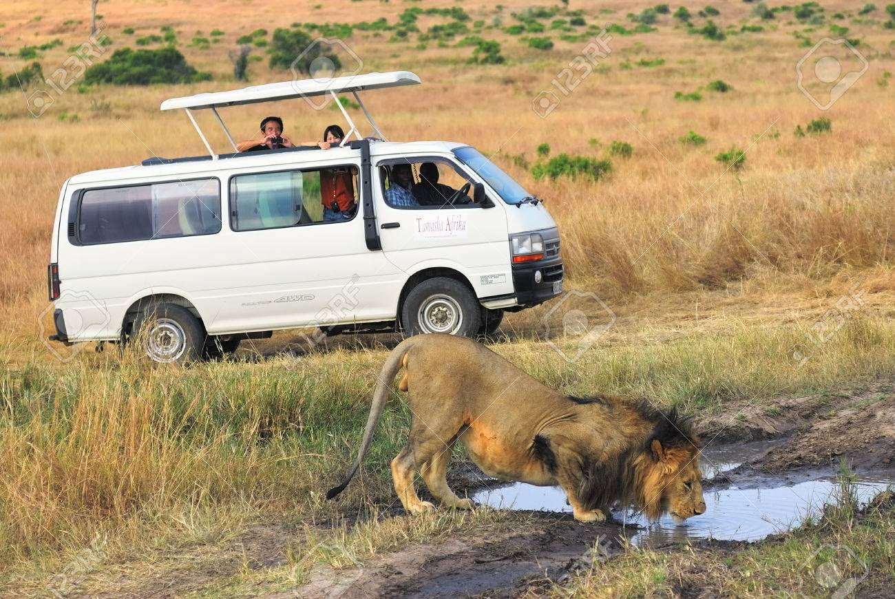 Safari In Masai Mara, Kenya. Touristic Car And Lion