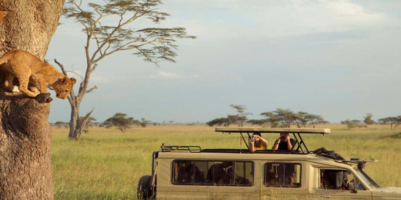 Afrozone Kingdomm Safaris Serengeti National Park