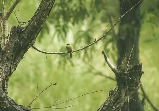 Bird Bardia National Park