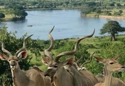 7-Day Southern Tanzania Safari
