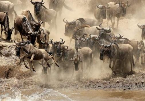 Masai Mara National Reserve 003