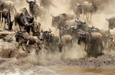 2-Day Maasai Mara Game Reserve Safari
