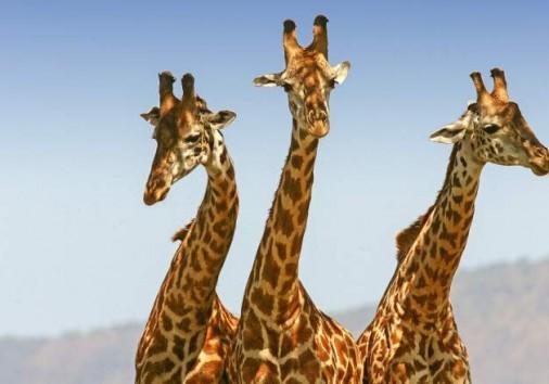 Masai Mara National Reserve 004
