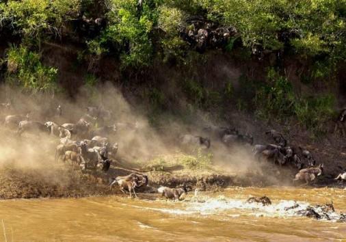 Masai Mara National Reserve 013