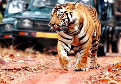 10-Day Rajasthan and Wildlife Safari