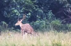 5-Day Bardia National Park Safari