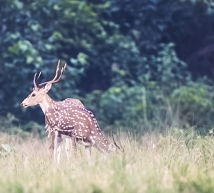 5-Day Bardia National Park Safari