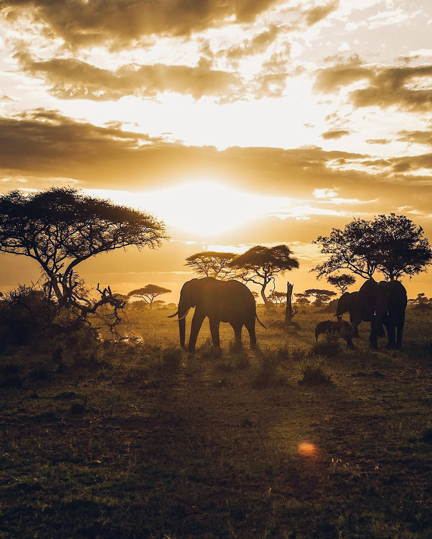 This Luxury Safari Brand Is Leading The Way In Eco Tourism