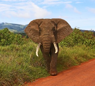 3-Day Top Notch Tanzania Safari