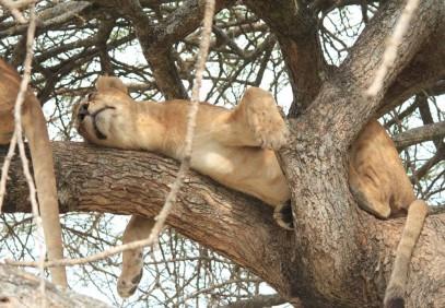 7-Day Grand Tanzania Safari