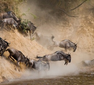 8-Day Explore The Wild Safari Tanzania