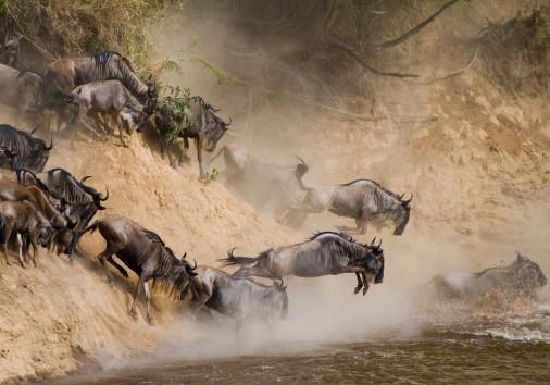 Serengeti Wildebeest Migration Pattern