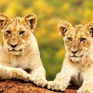 Tanzania Safari Holidays 1