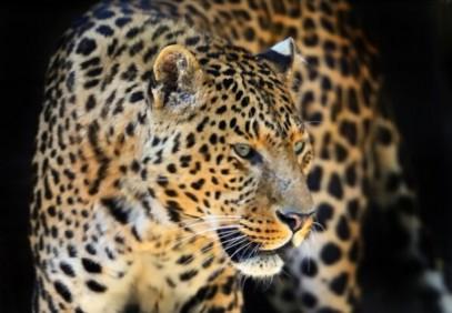 10-Day Leopard Safari with Wild Bush Camping