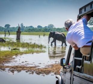 22-Day Luxury Safari in Sinharaja, Udawalawe & Wilpattu