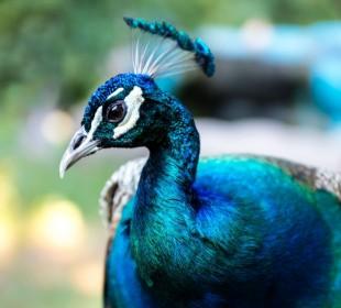36-Day Birding Sanctuary Safari in Sri Lanka