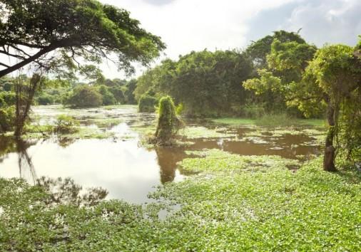 Chilaw Everglades, Sri Lanka, Asia