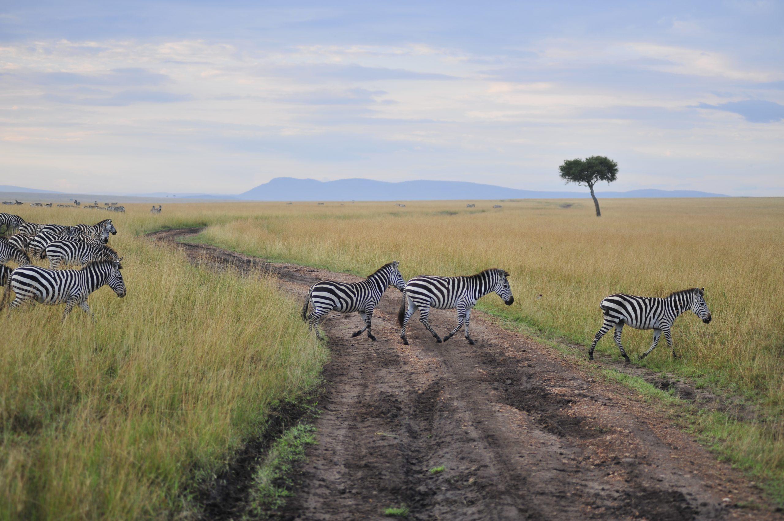 Masai Mara with Adept Kenya Safaris