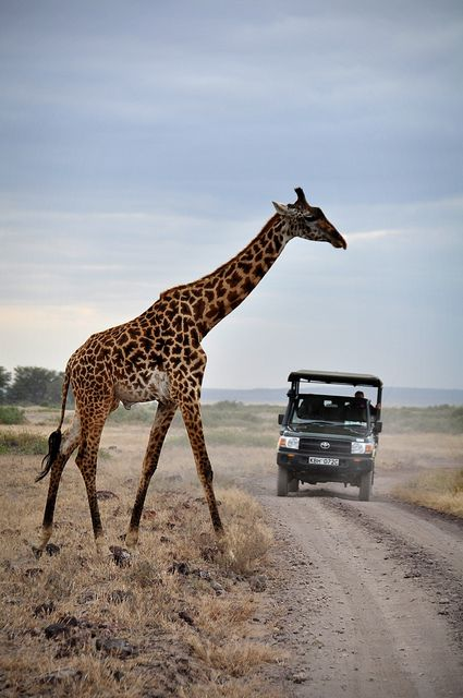 Giraffeandtruck