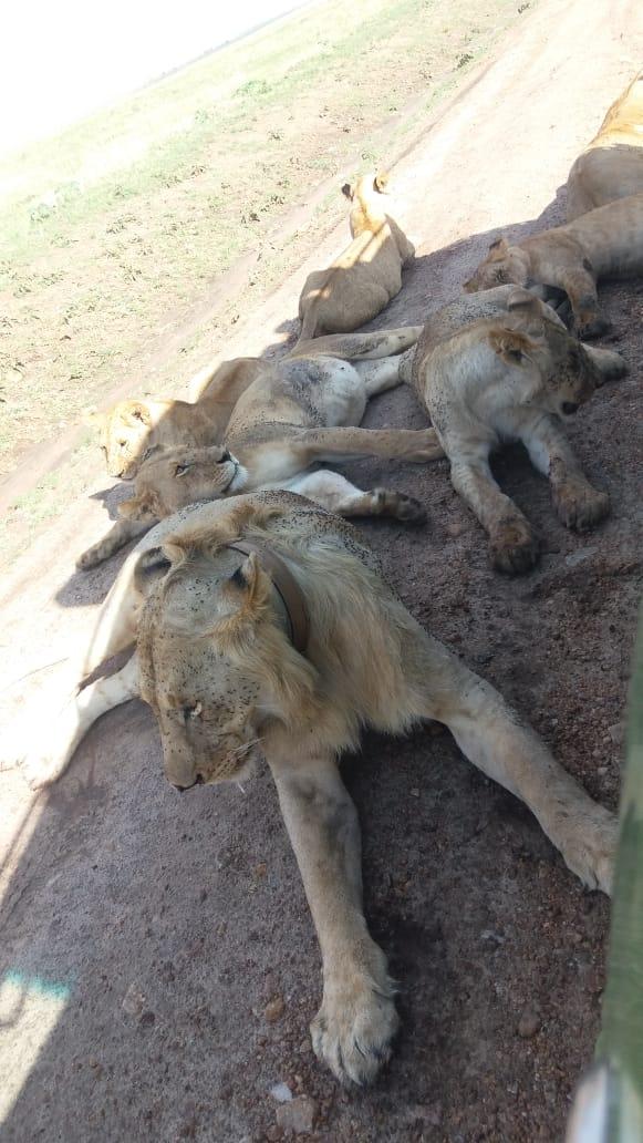 Epic safari