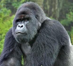 3 Days Uganda Gorilla Safari