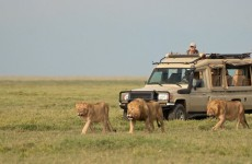 5-Day Out of Africa's Big Five Safari