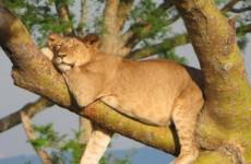 10 Days Uganda Gorilla and Wildlife Safari