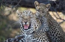 6-Day Northern Tanzania Safari