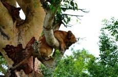 4-Day Uganda Gorilla Trekking and Wildlife Safari