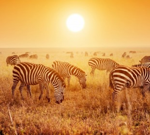 3-Day Tarangire, Ngorongoro and Lake Manyara National Park