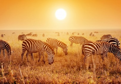 3-Day Tarangire, Ngorongoro and Lake Manyara National Park