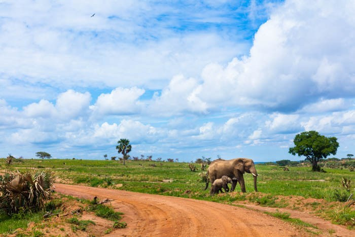 3 Days Murchison Falls Safari 3