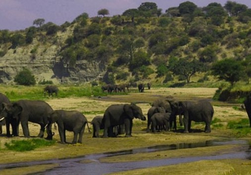 4 Day Selous Game Reserve Tour 2 17994 1525167663
