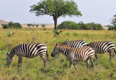 15 Days Best of Uganda North to South Adventure