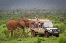 7 Days Safari to Samburu, Ol Pejeta, Lake Nakuru, Maasai Mara