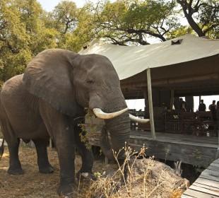14-Day Premier African Wilderness Safari