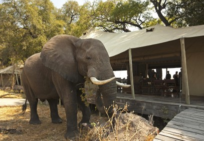 14-Day Premier African Wilderness Safari