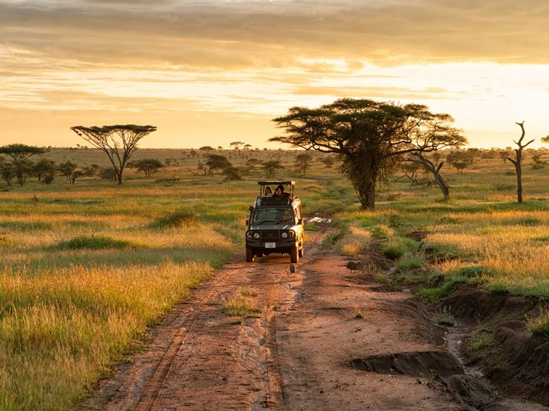 A Safari 01
