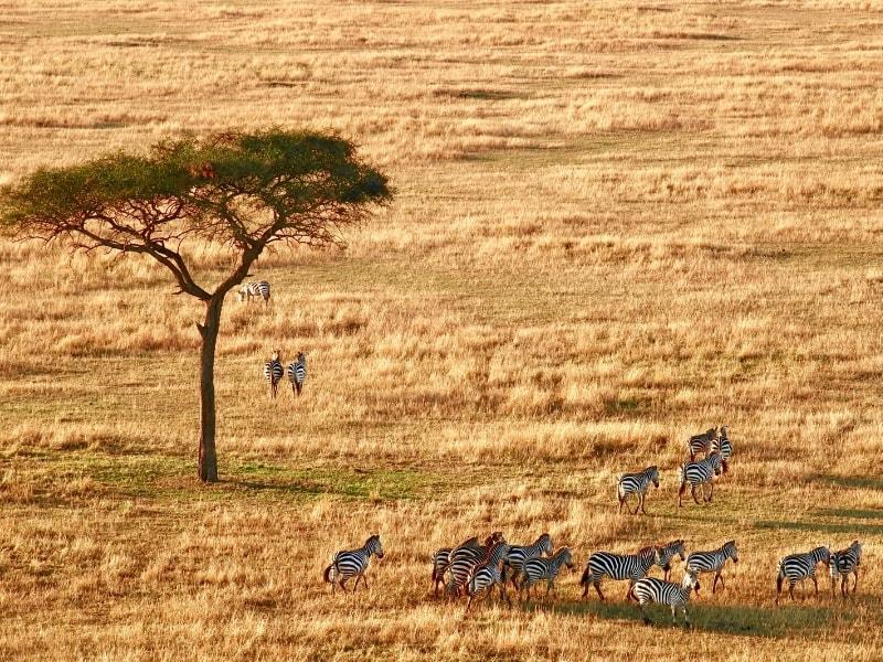 A Safari 04