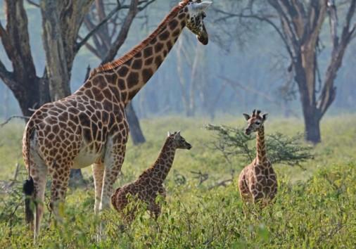 A Safari 05