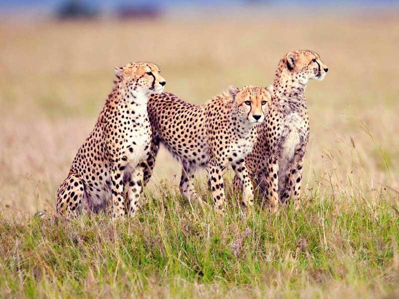 A Safari 06