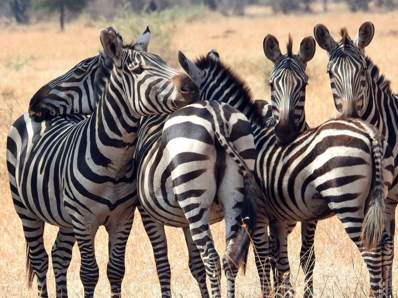A Safari 07